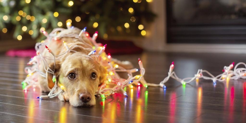 Yılbaşı, Noel, Christmas Nedir? Farkları Nelerdir? Ne zaman Kutlanır? 2019 Noel