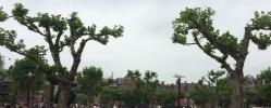 IMG_4999 Özgürlükler Şehri Amsterdam ve Mimarinin Başkenti Rotterdam